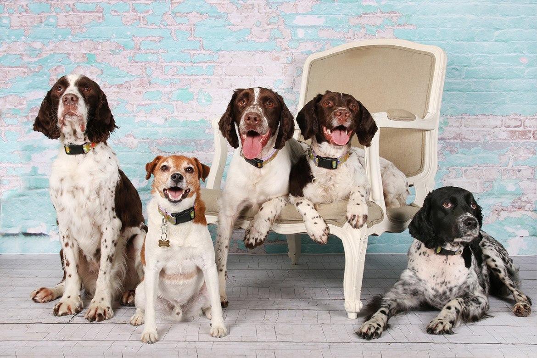 Dogs_various_seasons